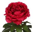 品種齊全、顏色悅目的人造花
