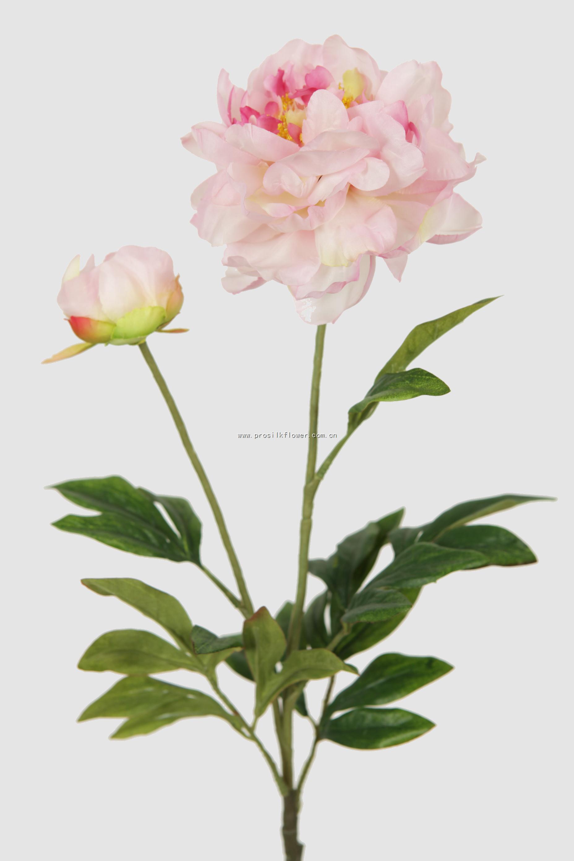 88cm 芙蓉牡丹 X2 淺紫紅